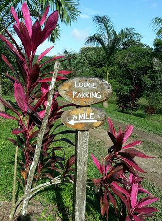Table Rock Jungle Lodge: Local Flora
