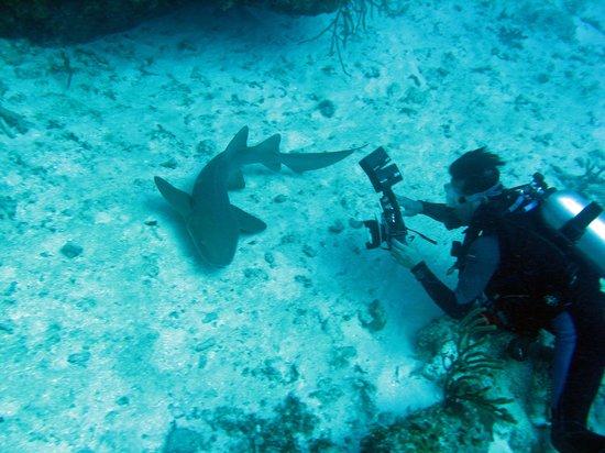 Blue Heaven Dives: Smile for Tim!