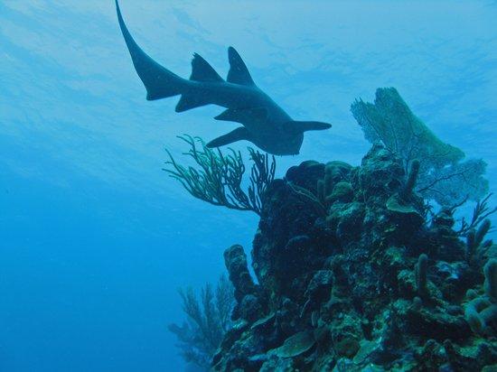 Blue Heaven Dives: Underwater cousin