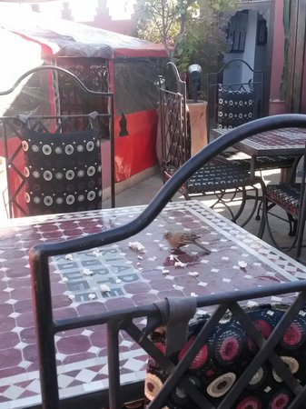 Riad La Porte Rouge: Roof terrace.