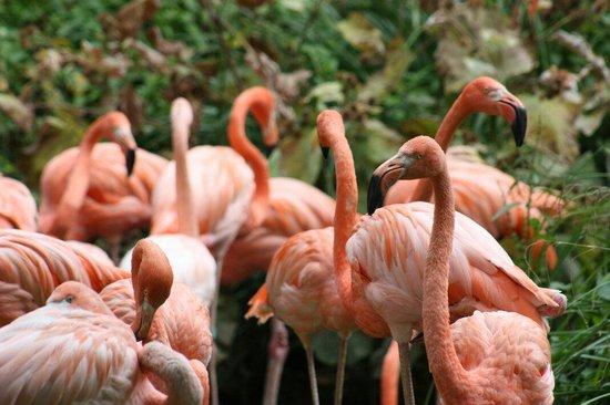 Jardin des Plantes : Flamingos in garden