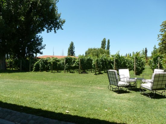 Posada Verde Oliva: grounds