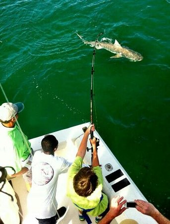 Carole Ann II Private Fishing Charters: 9ft tiger shark off Marco Island
