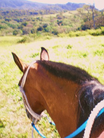 Tico Tours Guanacaste: Horseback riding