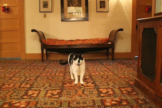 The Red Lion Inn: Simon the cat on the fourth floor