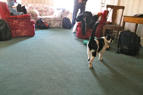The Red Lion Inn: Simon the cat dropped by our suite for a quick visit