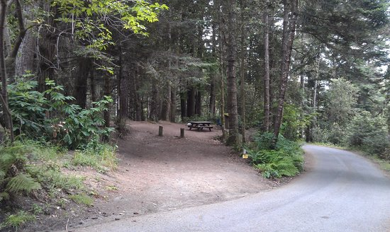 Van Damme State Park: Quieter Site 65 Away from Meadow