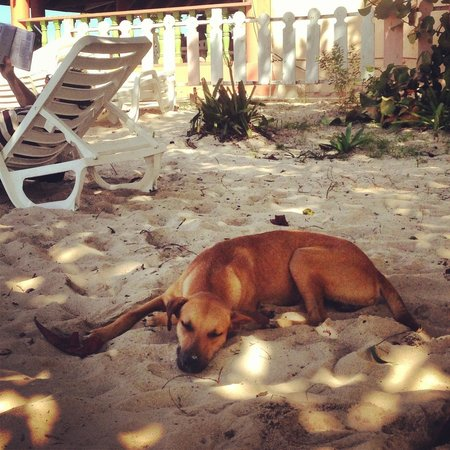 "Ansell's Thatch Walk Cottages : ""Stray"" is friendly and likes nap with you on the beach"