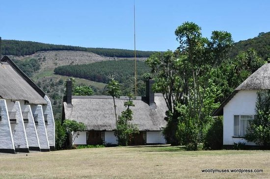 Mount Sheba, A Forever Lodge : Surrounding scenery