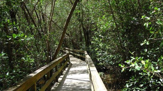 Everglades City Boardwalk & Airboat Tours