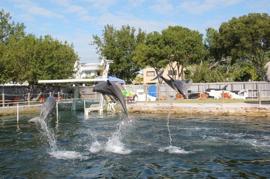 Gulf View Waterfront Resort: AIR BORN
