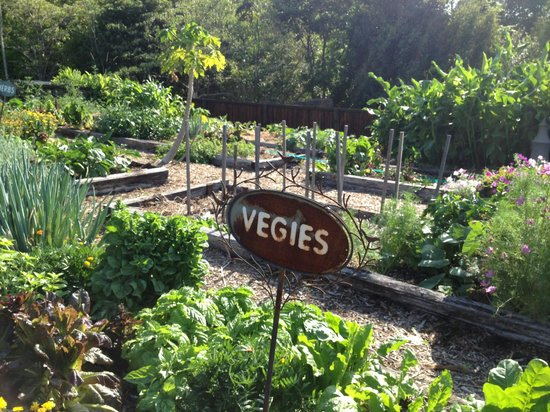 Gaia Retreat & Spa: Gaia Organic Vegetable and Herb Garden