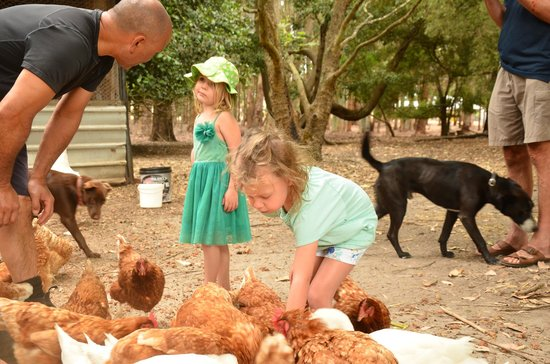 Margaret River Hideaway & Farmstay: Animal Feeding