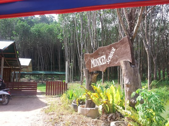 Lanta Monkey School: The entrance