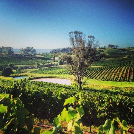 Briar Ridge Vineyard and Winery : Vintage 2014