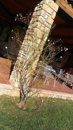 Hotel Apolymeni Petra : Τριαντάφυλλιες