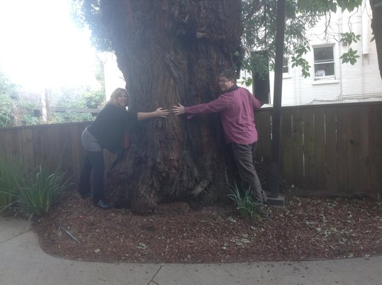 Mill Valley Inn: big tree in front of creek house