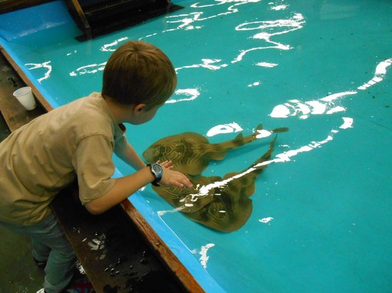 The Australian Shark & Ray Centre: hands on experience with the rays