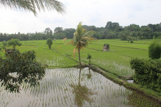 Tegal Sari: View from Room