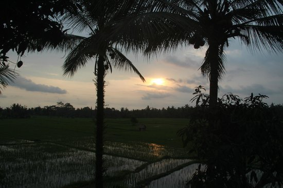 Tegal Sari: Sunset view that should not be missed!