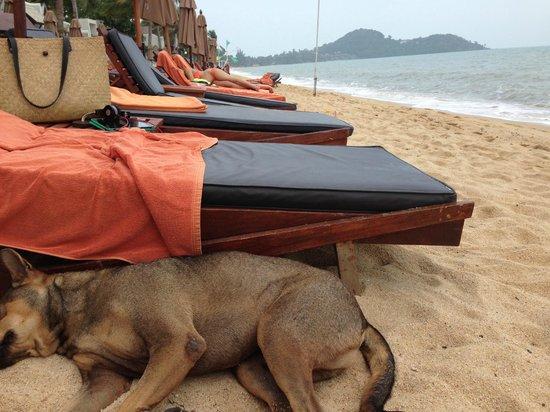 Anantara Bophut Koh Samui Resort : Beach