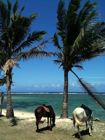 Le Cafe Fiji : Le Cafe lagoon view