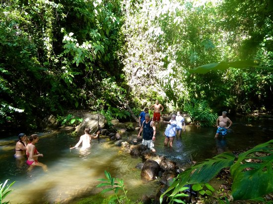 Living Forest: The swimming hole
