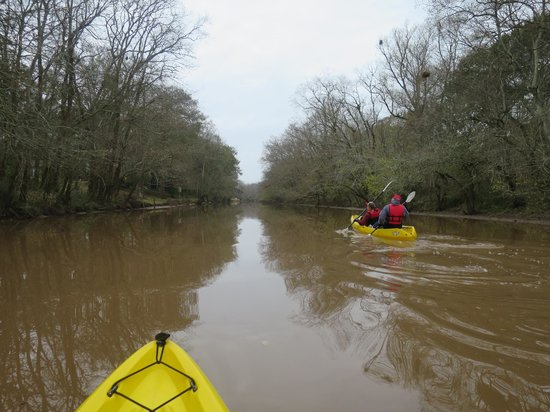 Bayou Teche Experience : Kids had no problem paddling on their own