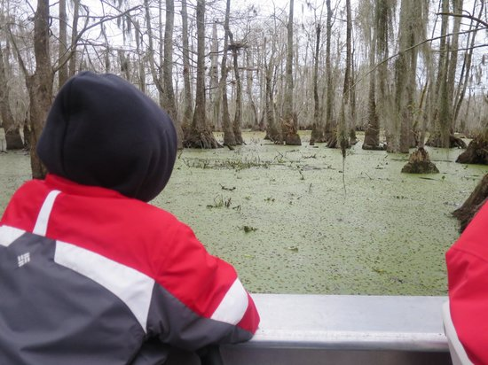 Cajun Country Swamp Tours : Lily pads