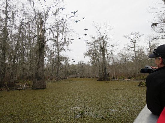 Cajun Country Swamp Tours : Birds in flight