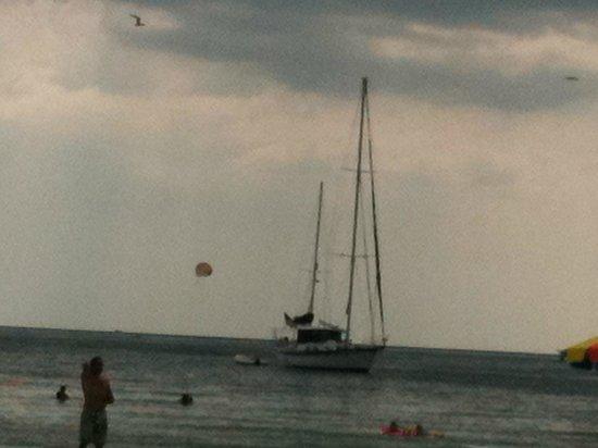 Sirata Beach Resort: Dolphin Excursion