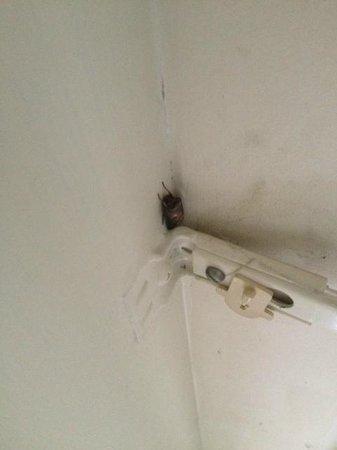 Rydges Rotorua: Cockroach in room