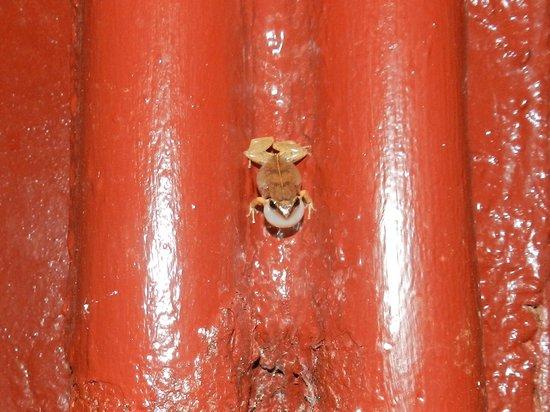 Tranquility Bay Antigua: Tree frog