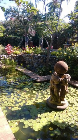 Stephans Guesthouse: Fish pond