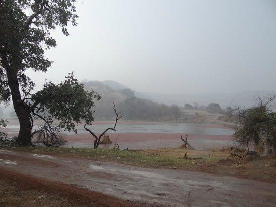 Ranthambore National Park: inside core area 4