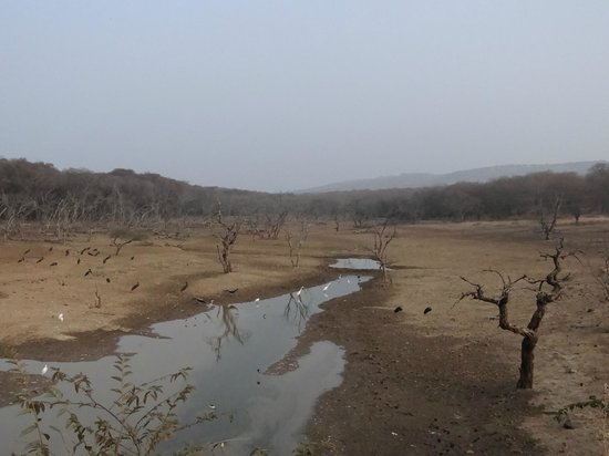 Ranthambore National Park: water body with various birds