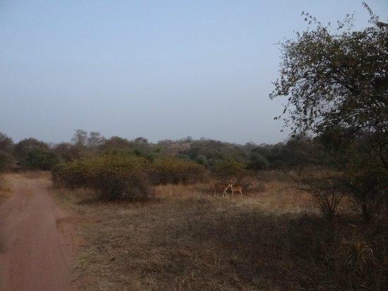 Ranthambore National Park: terrain