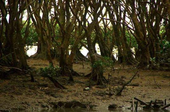 Manko Park : Mangroves