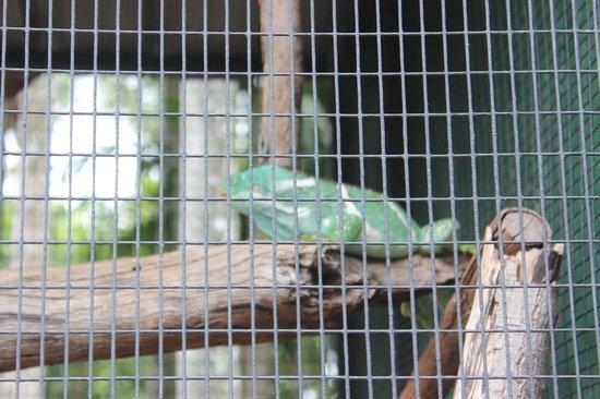 Crocodylus Park : Iguana