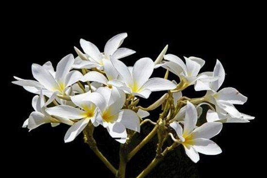 Orchid Villas Mauritius: Garden flower from Orchid Villas