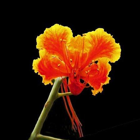 Orchid Villas Mauritius : Garden flower from Orchid Villas