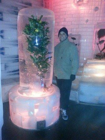 Ice Space : Frozen Orange Tree
