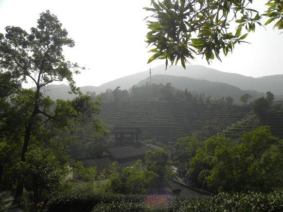 OCT East Shenzhen : tea terraces