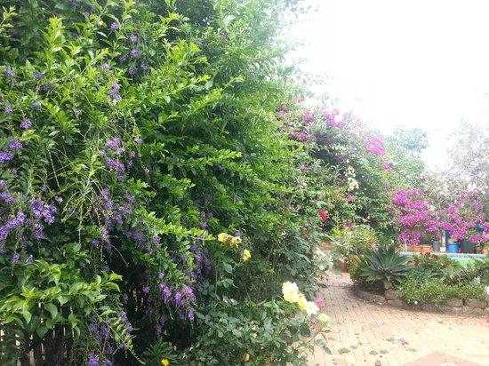 Pindari House : Gardens