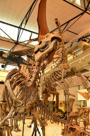 Queen Victoria Museum & Art Gallery: Dinosaurs