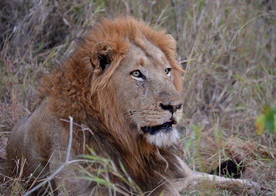 Ulusaba Safari Lodge : Locals