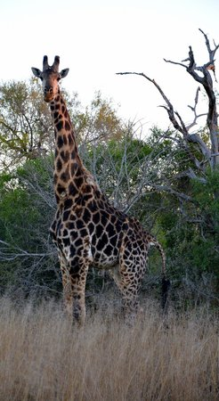 Ulusaba Safari Lodge: Locals