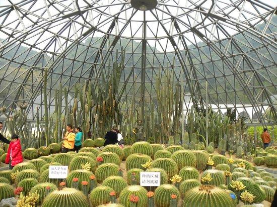 Xianhu Botanical Garden: cactus greenhouse