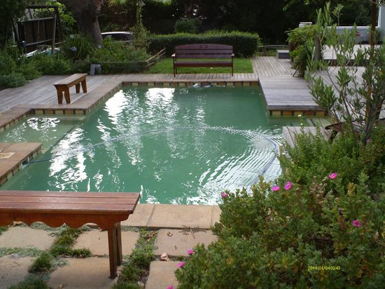 Hedge House : Pool
