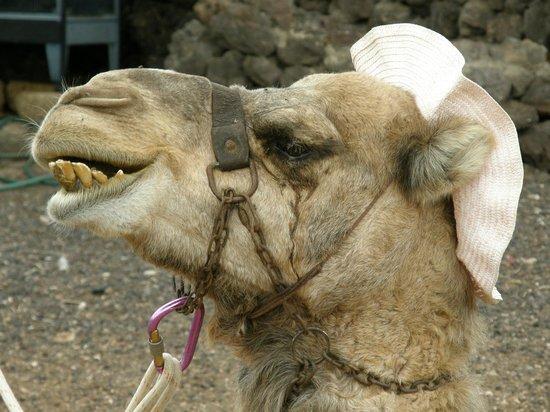 Camel Park: say hello to